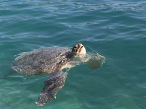 antalya_turtle